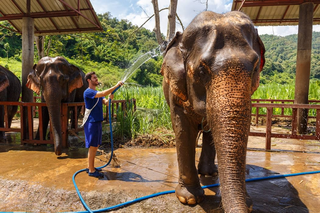 elephant being washed down with a hose